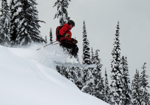 white grizzly cat skiing reviews